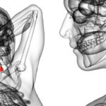 Oropharyngeal cancer staging explained with an image of oropharynx anatomy