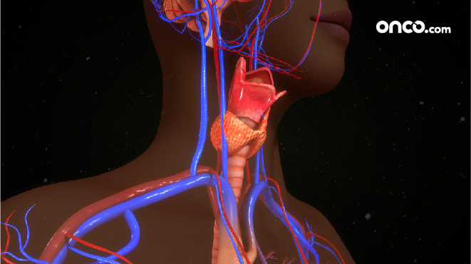 Throat cancer explained with throat anatomy