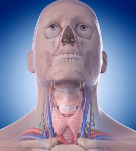 3D representation of throat anatomy, throat cancer types