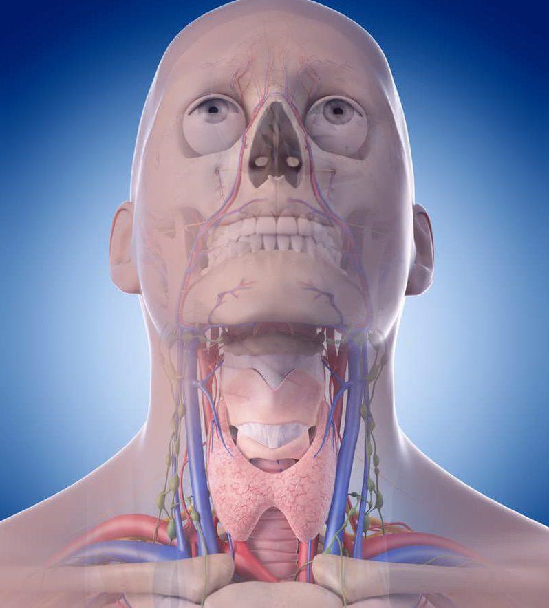 3D representation of throat anatomy, throat cancer types