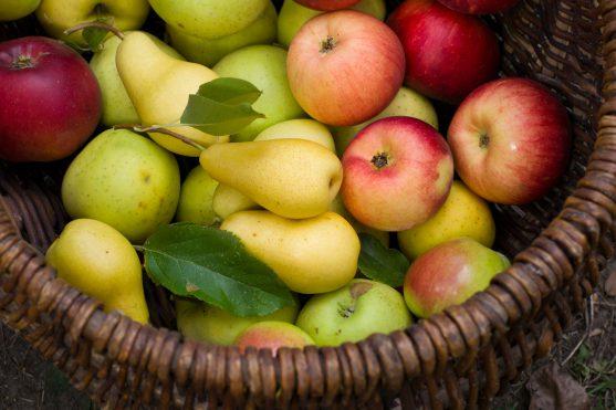 फलोरेटिन एक पदार्थ है जो सेब और नाशपाती जैसे फलों में पाया जाता है।
