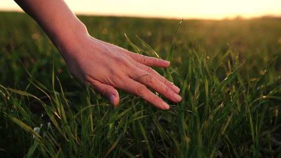 touch nature for cancer patients